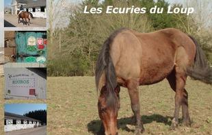 LES ECURIES DU LOUP - Saint-Loup-du-Dorat