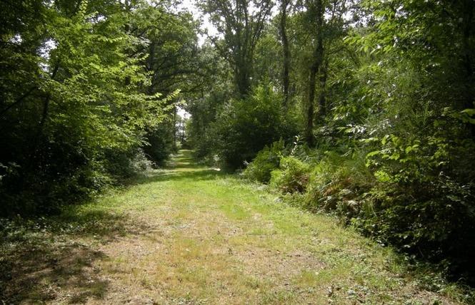 CHALETS DU VILLAGE NATURE 5 - Saint-Charles-la-Forêt