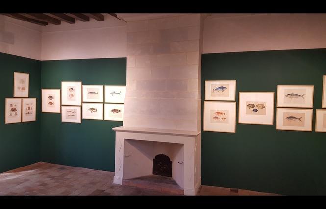 MUSEE D'ART ET D'HISTOIRE DE CHÂTEAU-GONTIER 5 - Château-Gontier-sur-Mayenne